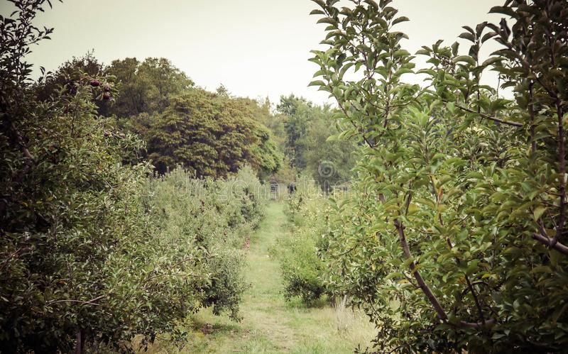Κρυμμένος στα δέντρα στοκ εικόνα με δικαίωμα ελεύθερης χρήσης