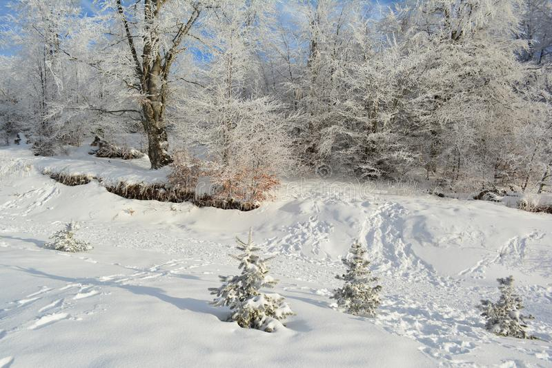 Κρυμμένος χιονώδης δρόμος εκτός από το δάσος στοκ φωτογραφία