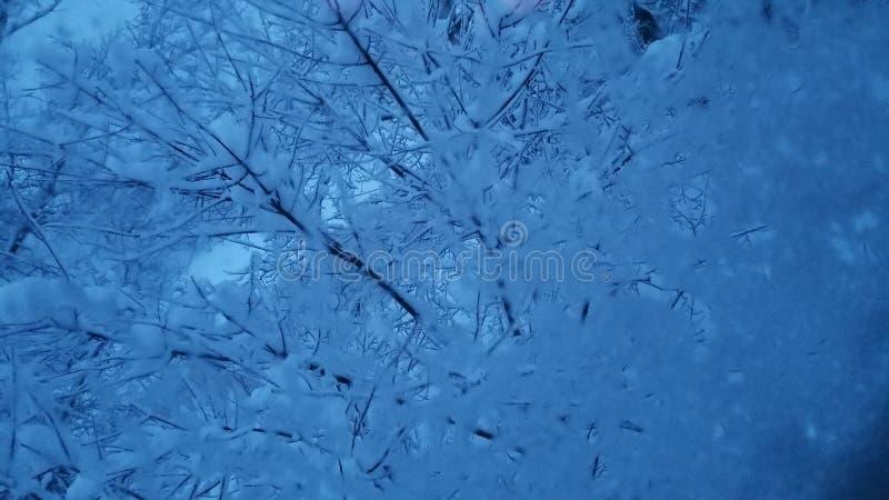 Κρυστάλλωση στα δέντρα στοκ εικόνες με δικαίωμα ελεύθερης χρήσης