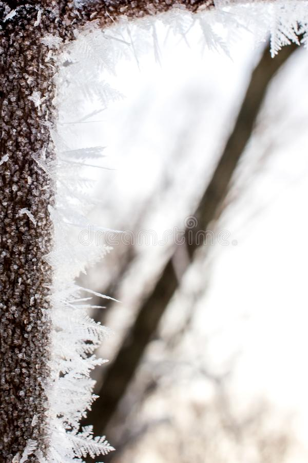 Κρυσταλλωμένο δέντρο νεράιδων Υπόβαθρο Wintr στοκ φωτογραφίες