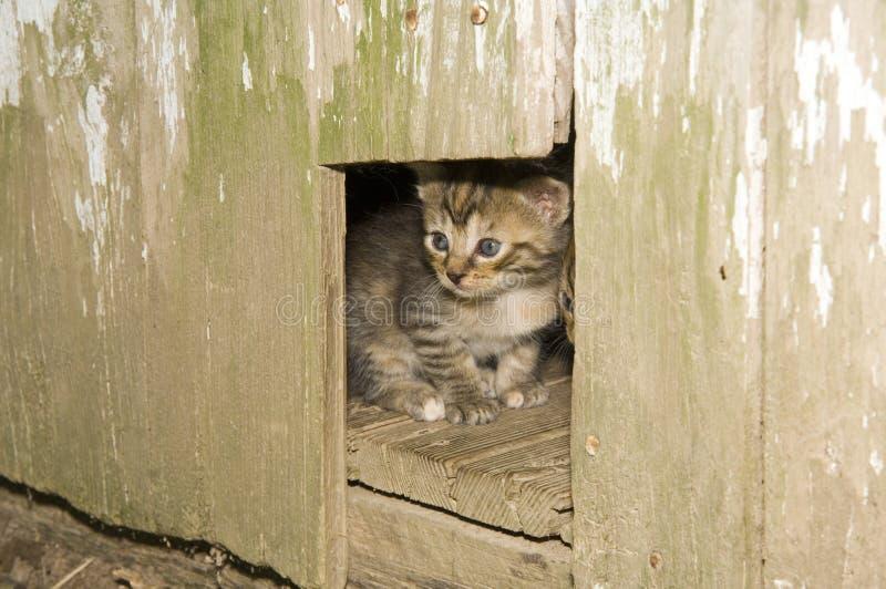 κρυφοκοίταγμα γατακιών &t στοκ εικόνες με δικαίωμα ελεύθερης χρήσης
