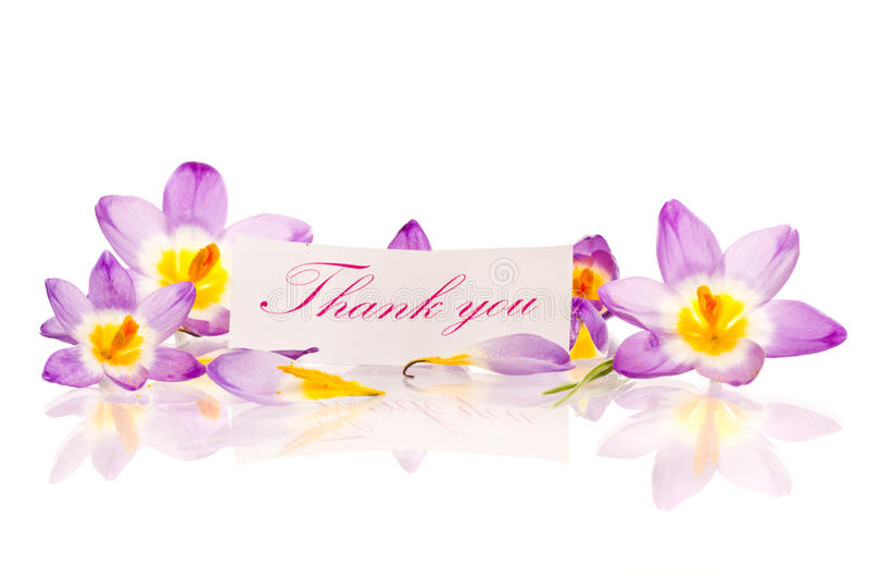 Κρόκοι με την ευγνωμοσύνη στοκ εικόνες