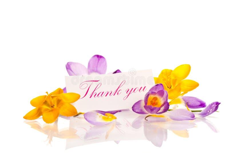 Κρόκοι με την ευγνωμοσύνη στοκ φωτογραφία με δικαίωμα ελεύθερης χρήσης