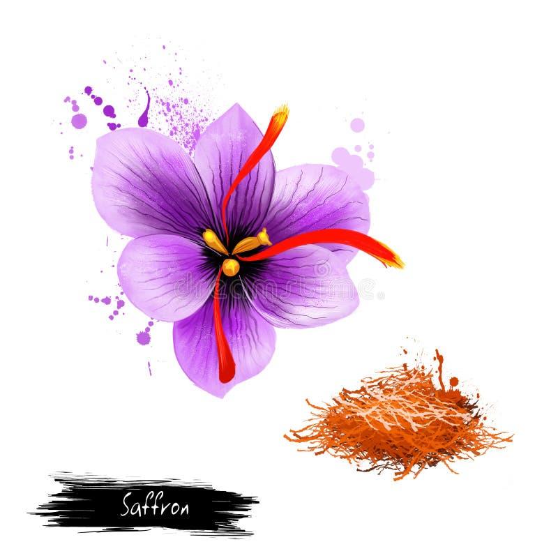 Κρόκος λουλουδιών και ξηρό καρύκευμα σαφρανιού που απομονώνονται στο άσπρο υπόβαθρο ελεύθερη απεικόνιση δικαιώματος
