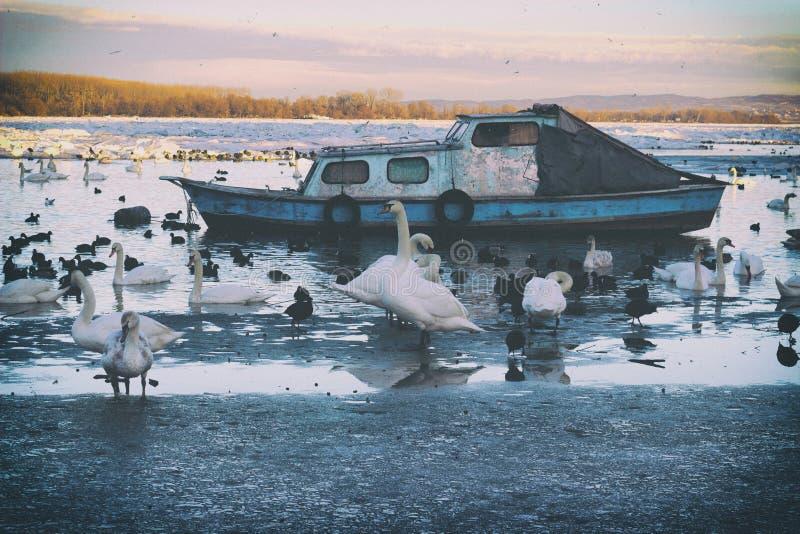 Κρύα χειμερινή ημέρα σε Δούναβη στοκ φωτογραφίες με δικαίωμα ελεύθερης χρήσης