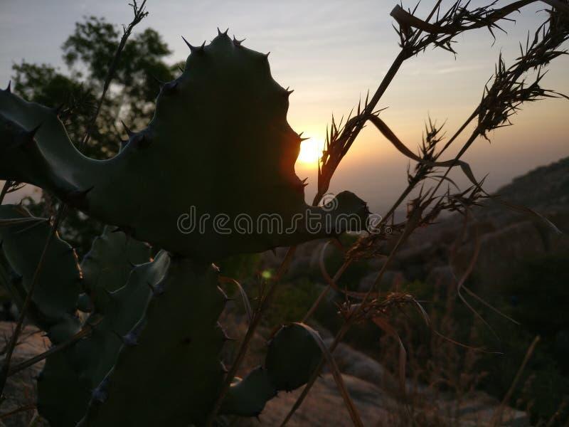 Κρύβοντας ήλιος κάκτων στοκ εικόνα