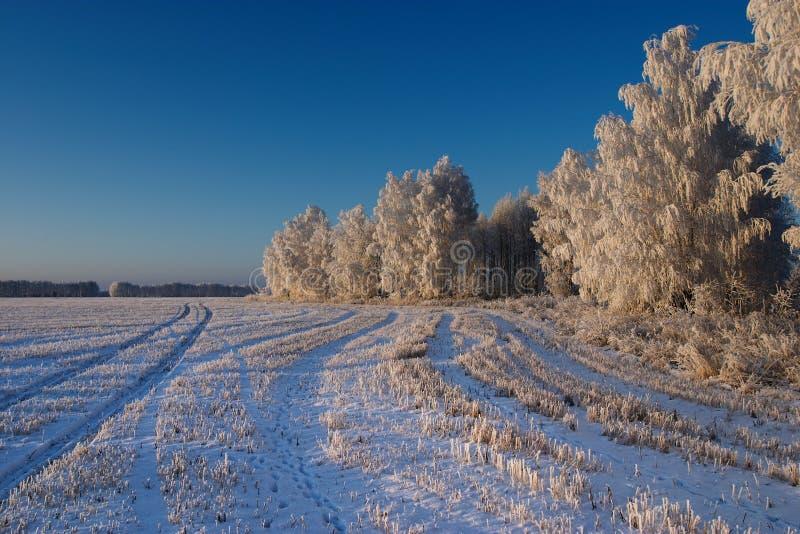 κρύος χειμώνας ημέρας στοκ φωτογραφία με δικαίωμα ελεύθερης χρήσης