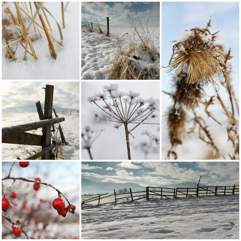 κρύος χειμώνας κολάζ στοκ φωτογραφίες