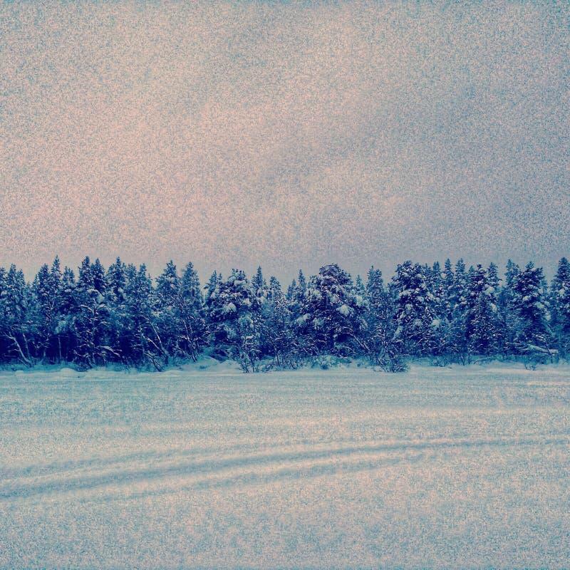 κρύο δάσος στοκ εικόνες