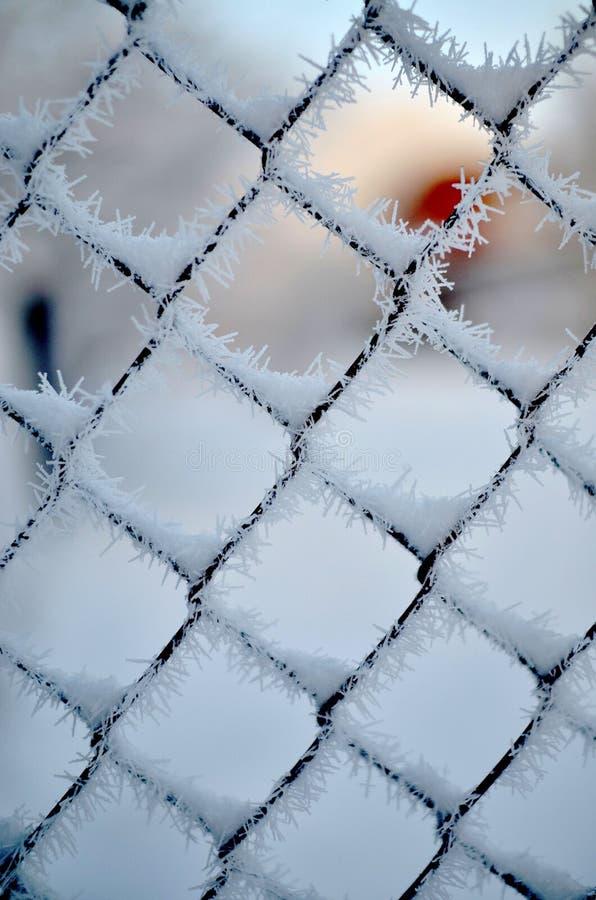 Κρύο στο φράκτη στοκ φωτογραφίες με δικαίωμα ελεύθερης χρήσης