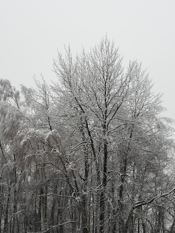 κρύο στοκ φωτογραφίες με δικαίωμα ελεύθερης χρήσης