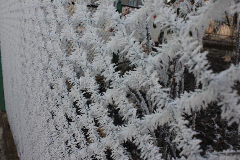 Κρύσταλλα πάγου στο φράκτη στοκ εικόνα με δικαίωμα ελεύθερης χρήσης