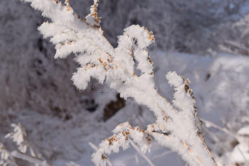 Κρύσταλλα παγετού στοκ εικόνες με δικαίωμα ελεύθερης χρήσης