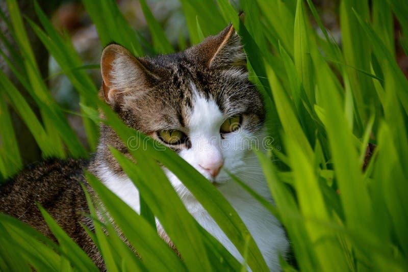 Κρύψιμο γατών στη χλόη στοκ φωτογραφία με δικαίωμα ελεύθερης χρήσης