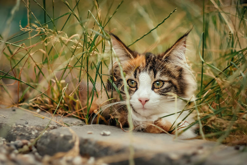 Κρύψιμο γατών στη χλόη στοκ εικόνες με δικαίωμα ελεύθερης χρήσης