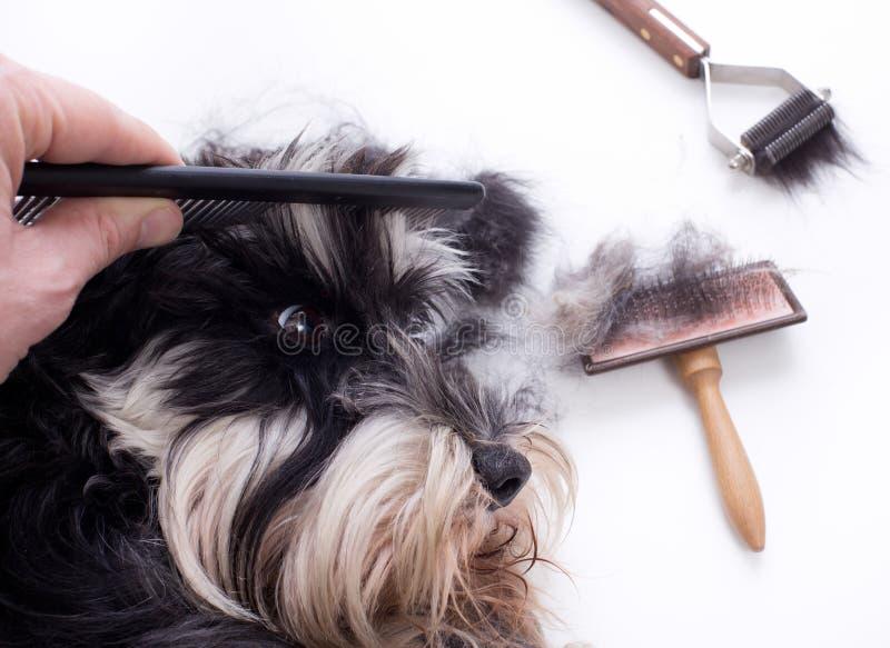 Κτένισμα του χαριτωμένου σκυλιού στοκ φωτογραφία με δικαίωμα ελεύθερης χρήσης