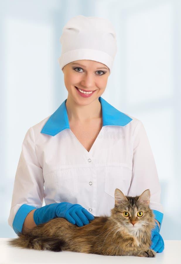 Download κτηνίατρος εξέτασης γατών στοκ εικόνες. εικόνα από φάρμακο - 22779420