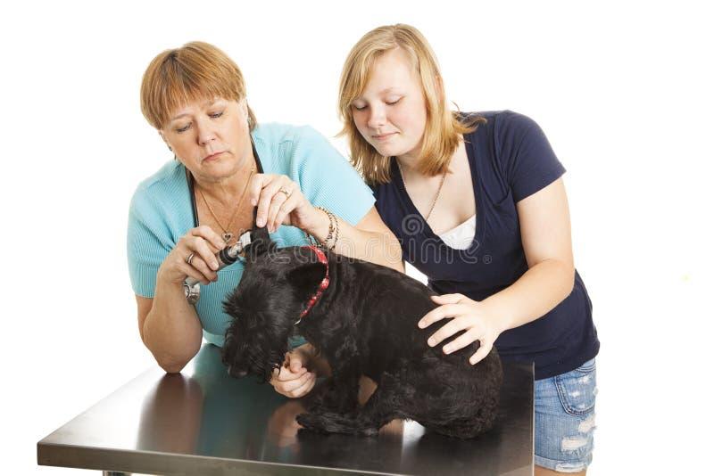 κτηνίατρος εξέτασης στοκ φωτογραφίες