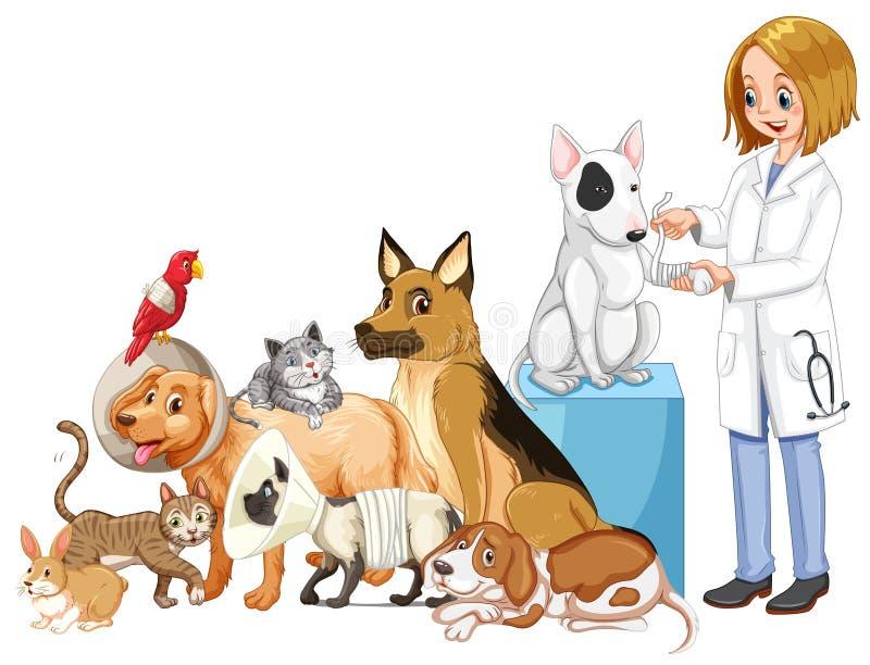Κτηνίατρος και πολλά τραυματισμένα ζώα διανυσματική απεικόνιση