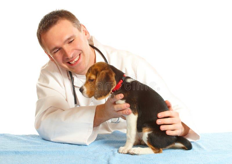 κτηνίατρος κουταβιών γιατρών λαγωνικών στοκ φωτογραφία