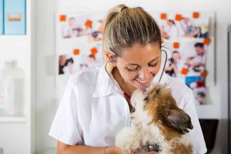 Κτηνίατρος με το σκυλί του Shih Tzu στοκ εικόνες