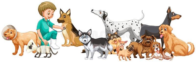 Κτηνίατρος που εξετάζει πολλά σκυλιά απεικόνιση αποθεμάτων