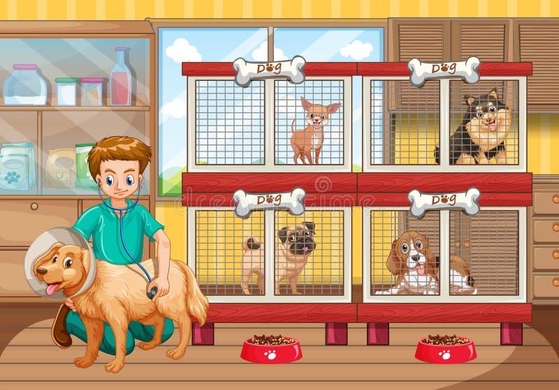 Κτηνίατρος που ελέγχει επάνω πολλά σκυλιά στο νοσοκομείο απεικόνιση αποθεμάτων