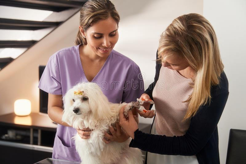 Κτηνιατρική διδασκαλία πώς να χρησιμοποιήσει τον κουρευτή ζώων καρφιών με το σκυλί στοκ εικόνες