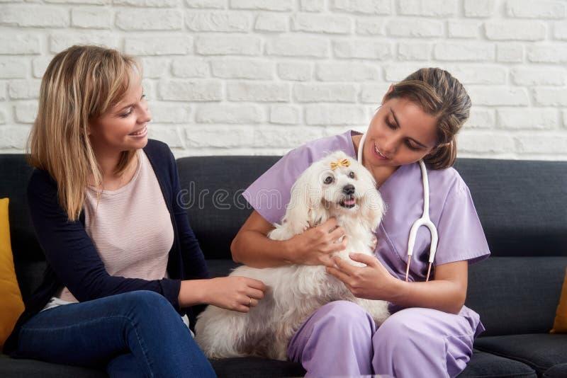 Κτηνιατρική κλήση σπιτιών με τον ιδιοκτήτη και το ζώο σκυλιών γιατρών στοκ φωτογραφίες