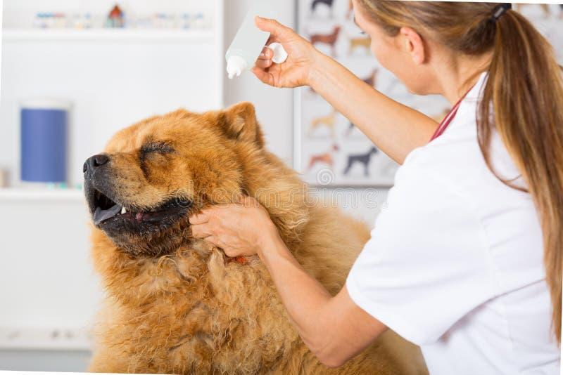 Κτηνιατρική κλινική στοκ εικόνες