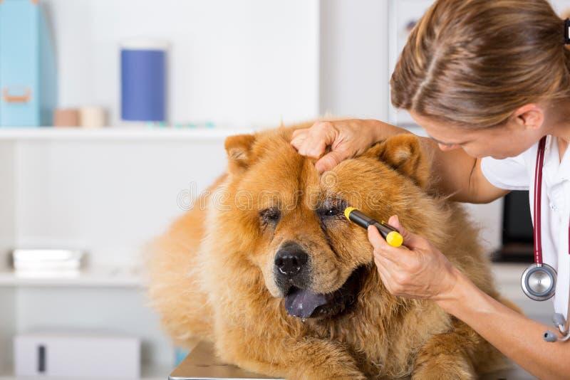 Κτηνιατρική κλινική στοκ εικόνες με δικαίωμα ελεύθερης χρήσης