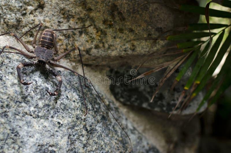 Κτυπήστε την αράχνη στο βράχο στοκ εικόνα με δικαίωμα ελεύθερης χρήσης