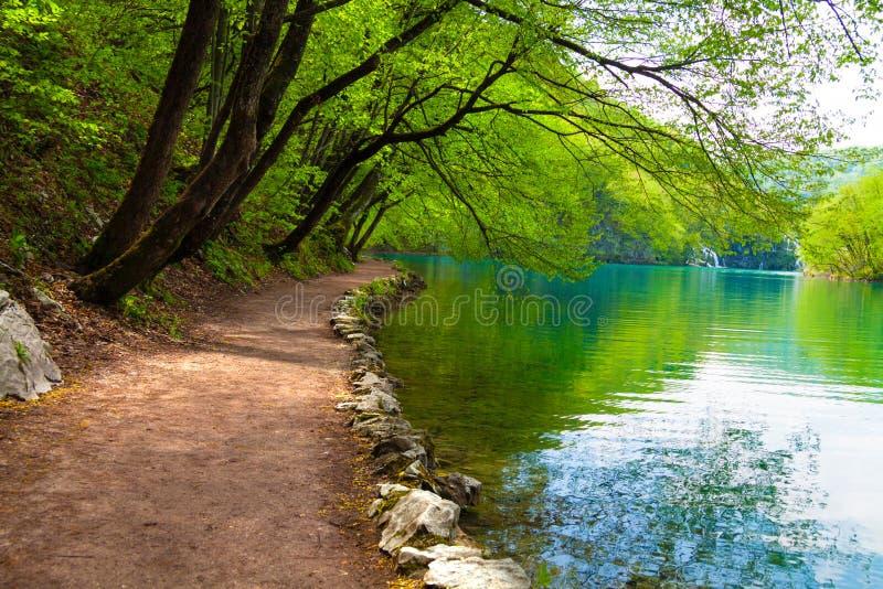 Κτυπημένη διαδρομή κοντά σε μια δασική λίμνη στοκ εικόνες