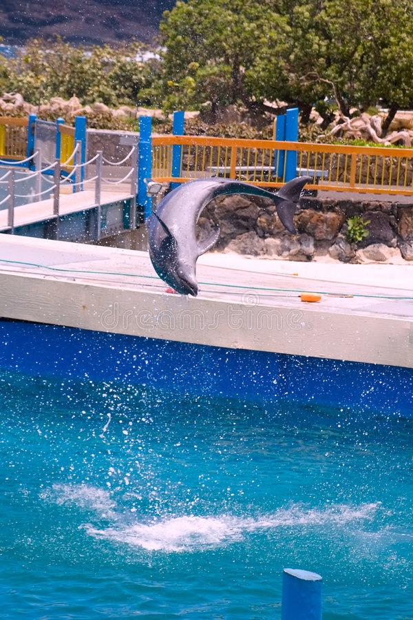 κτύπημα δελφινιών στοκ φωτογραφίες με δικαίωμα ελεύθερης χρήσης