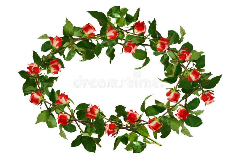 Κυκλίσκος των λουλουδιών, κόκκινος με τα άσπρα τριαντάφυλλα και τα πράσινα φύλλα isola στοκ φωτογραφία με δικαίωμα ελεύθερης χρήσης