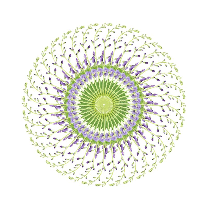 Κυκλικό σχέδιο των λουλουδιών baptisia ελεύθερη απεικόνιση δικαιώματος