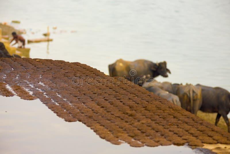 Ξηρά Patties κοπριάς αγελάδων που ξεραίνουν τα καύσιμα Γάγκης Ινδία στοκ εικόνα