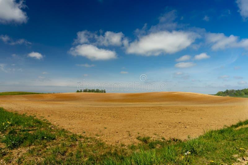 Κυλώντας λόφοι, αγροτικός τομέας και πικραλίδες στο λιβάδι στοκ εικόνες