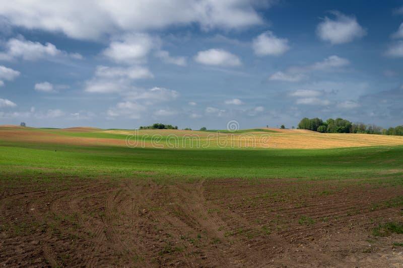 Κυλώντας λόφοι, αγροτικός τομέας και πικραλίδες στο λιβάδι στοκ φωτογραφία