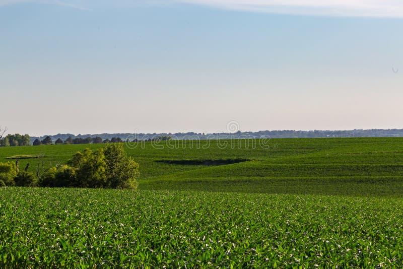 Κυλώντας τομέας του νέου αγροκτήματος καλαμποκιού κάπου στην Ομάχα Νεμπράσκα στοκ εικόνες