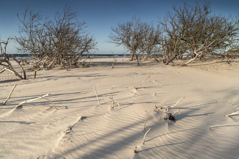 Κυματισμοί άμμου και driftwood στην παραλία Culbin στη Σκωτία στοκ φωτογραφίες