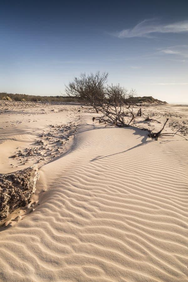 Κυματισμοί άμμου και driftwood στην παραλία Culbin στη Σκωτία στοκ φωτογραφία με δικαίωμα ελεύθερης χρήσης
