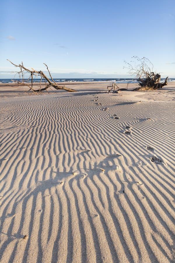 Κυματισμοί & διαδρομές άμμου στο ST Cyrus στη Σκωτία στοκ φωτογραφία με δικαίωμα ελεύθερης χρήσης