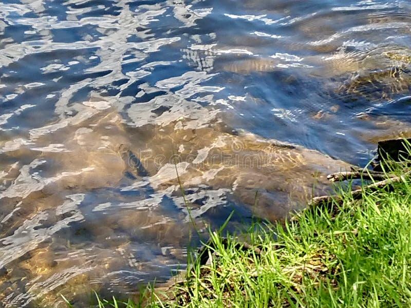 Κυματισμοί νερού ποταμού σε μια χλοώδη ακτή στοκ φωτογραφία με δικαίωμα ελεύθερης χρήσης