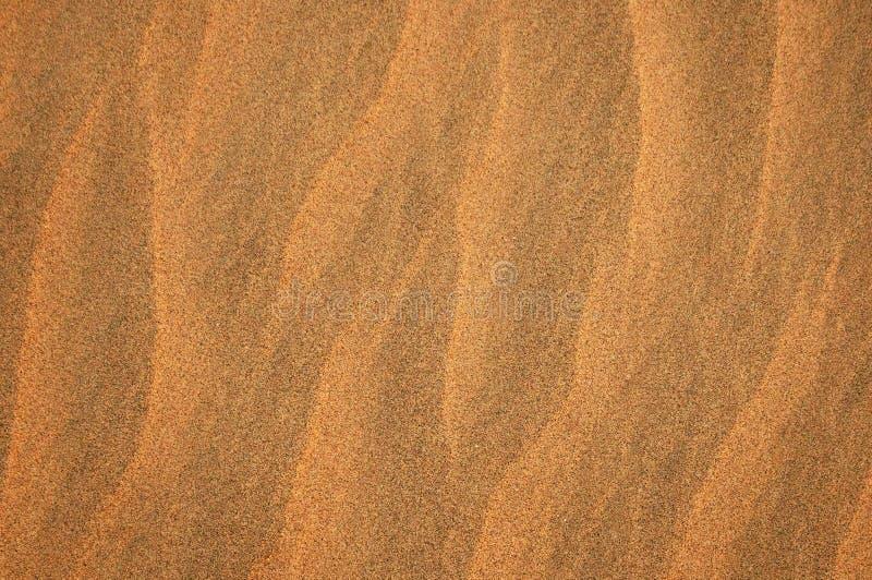 Κυματισμοί σιταριού άμμου στην έρημο στοκ φωτογραφία με δικαίωμα ελεύθερης χρήσης