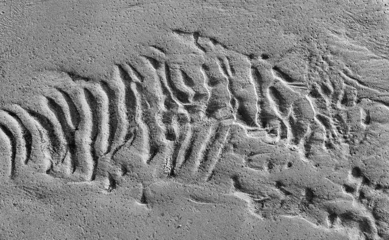 Κυματισμοί στην υγρή σύσταση υποβάθρου άμμου στοκ φωτογραφίες