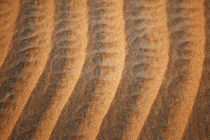 Κυματισμοί στη χρυσή άμμο στοκ φωτογραφία