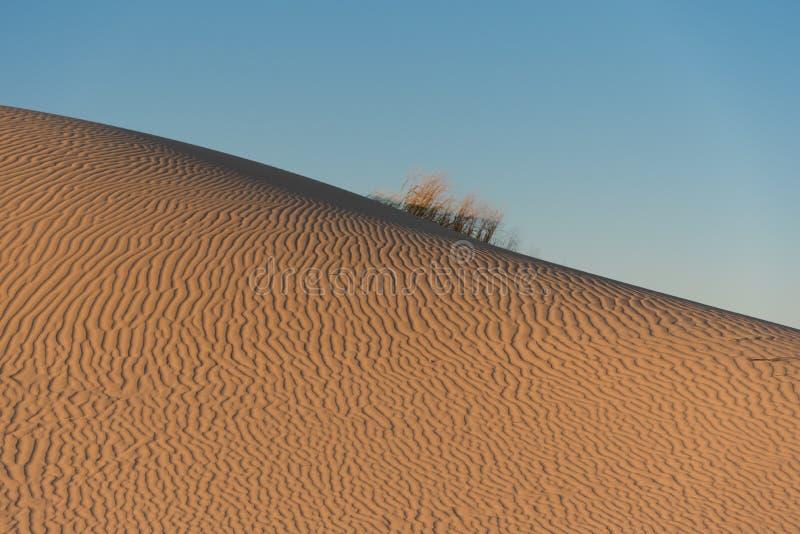 Κυματισμοί στους αμμόλοφους σε Monahans Sandhills στοκ φωτογραφίες