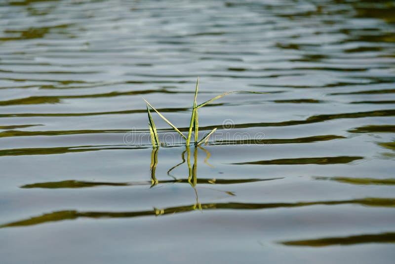 Κυματισμοί στη λίμνη στοκ εικόνες με δικαίωμα ελεύθερης χρήσης