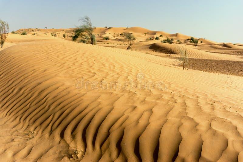 Κυματισμοί των αμμόλοφων ερήμων στη Σαχάρα, Τυνησία στοκ φωτογραφία